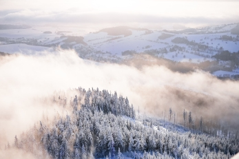 fog-in-snowy-forest-winter-scenery-picjumbo-com